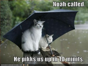 funny-pictures-cats-umbrella-rain-flood